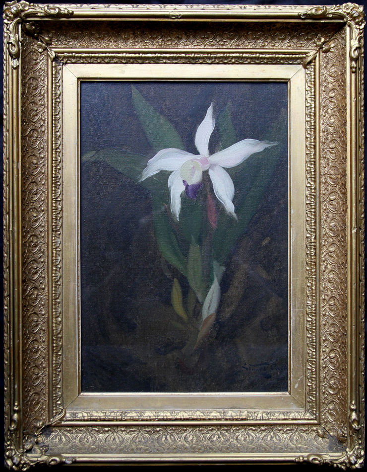 Orchid by Glasgow Boy James Stuart Park at Richard Taylor Fine Art