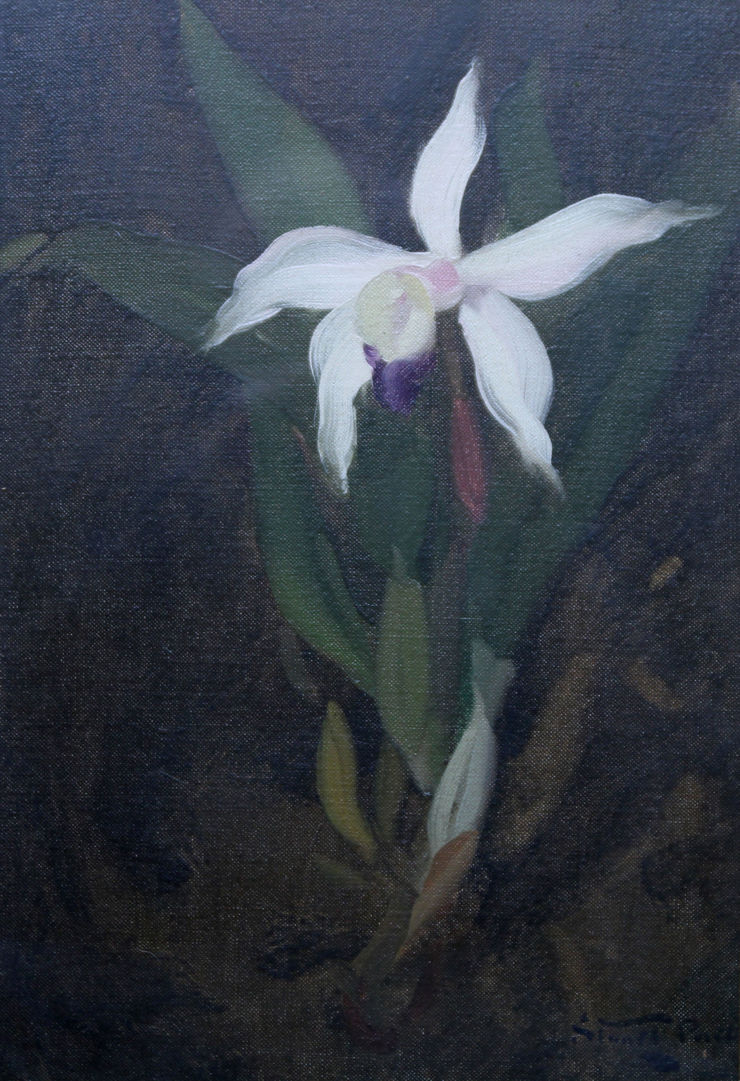 The Orchid by James Stuart Park Richard Taylor Fine Art