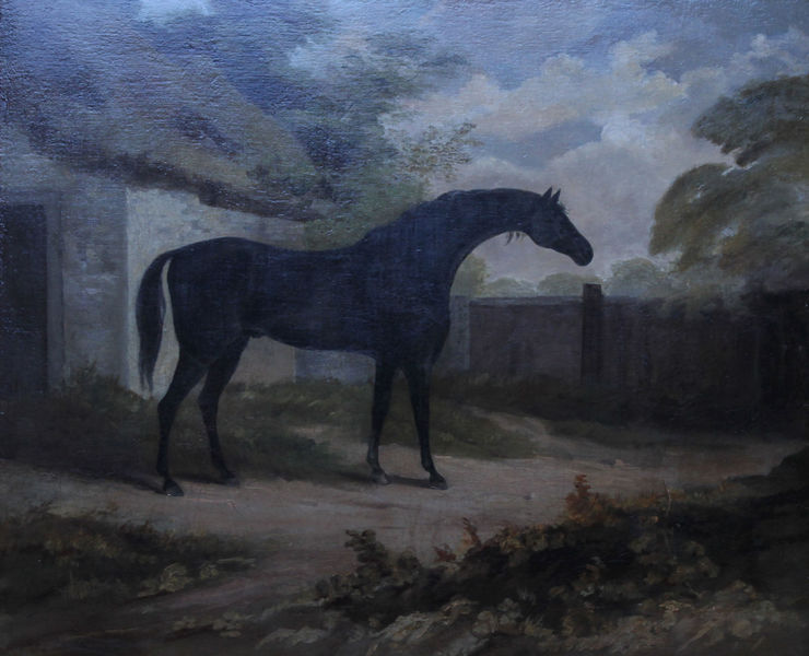 Trumpator Black Racehorse by John Boultbee Richard Taylor Fine Art