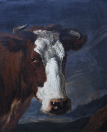 Head of a Shorthorn Cow Portrait
