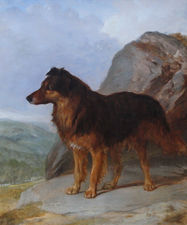Collie Dog Portrait by Victorian artist Richard Taylor Fine Art
